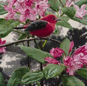 scarlet tanager bird blossoms wildlife rod frederick