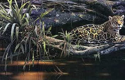 jaguar chill quiet calm animal jungle rainforest daniel smith art