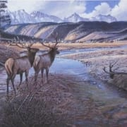elk wildlife animal wilderness taylor fork crossing larry zabel