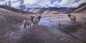 elk wildlife moving animal wilderness taylor fork crossing larry zabel