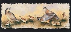 quail run birds chatting monica stobie print