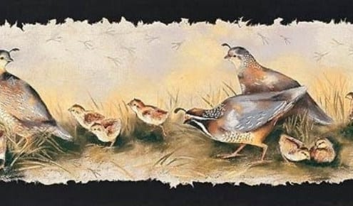 quail run birds chatting monica stobie print