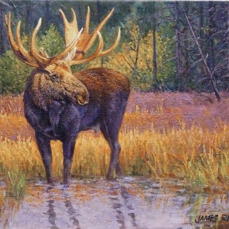 moose wildlife animal western art james reid
