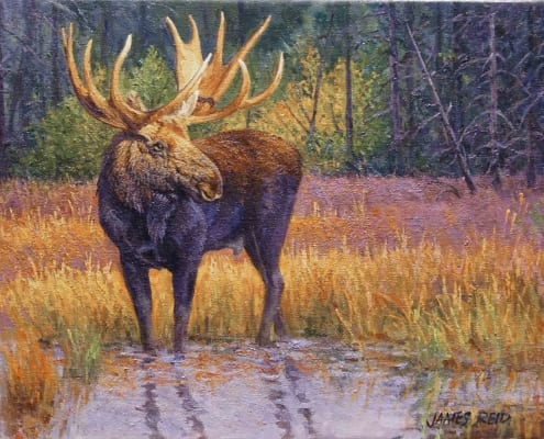 moose wildlife animal western art james reid