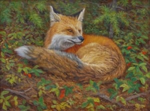 red fox wildlife resting sleeping james reid painter