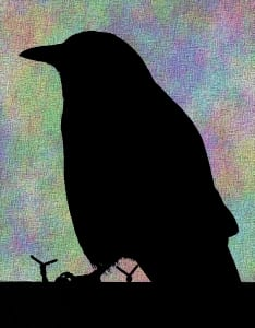 american crow photograph silhouette wessels galbreath