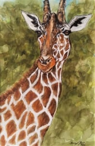 Olivia giraffe wild exotic animal cheryll root