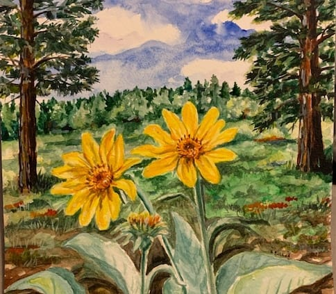 balsam root flowers watercolor sketch woods trees helen boland