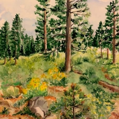 ponderosa pine woods tree forest wilderness helen boland watercolor