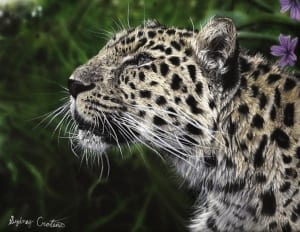 cat leopard colored pencil wildlife drawing photorealistic aimee croteau
