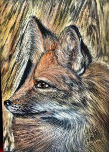 red fox profile scratch board art sharley schenk