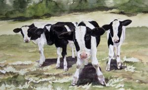 cow cattle livestock farm ranch watercolor gottschalk